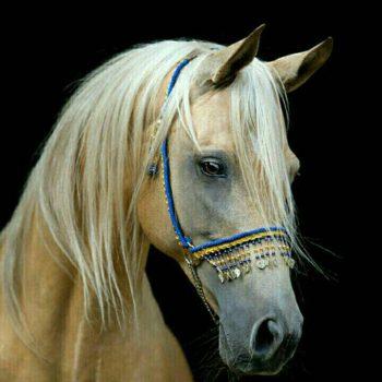 مدل نقاشی اسب مدل نقاشی اسب سری 2 مدل نقاشی اسب سری 2 photo 2018 06 27 11 37 20 350x350