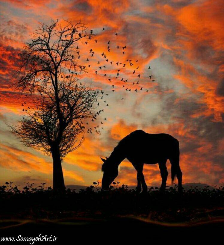 مدل نقاشی اسب سری 2 مدل نقاشی اسب سری 2 photo 2018 06 27 11 37 22