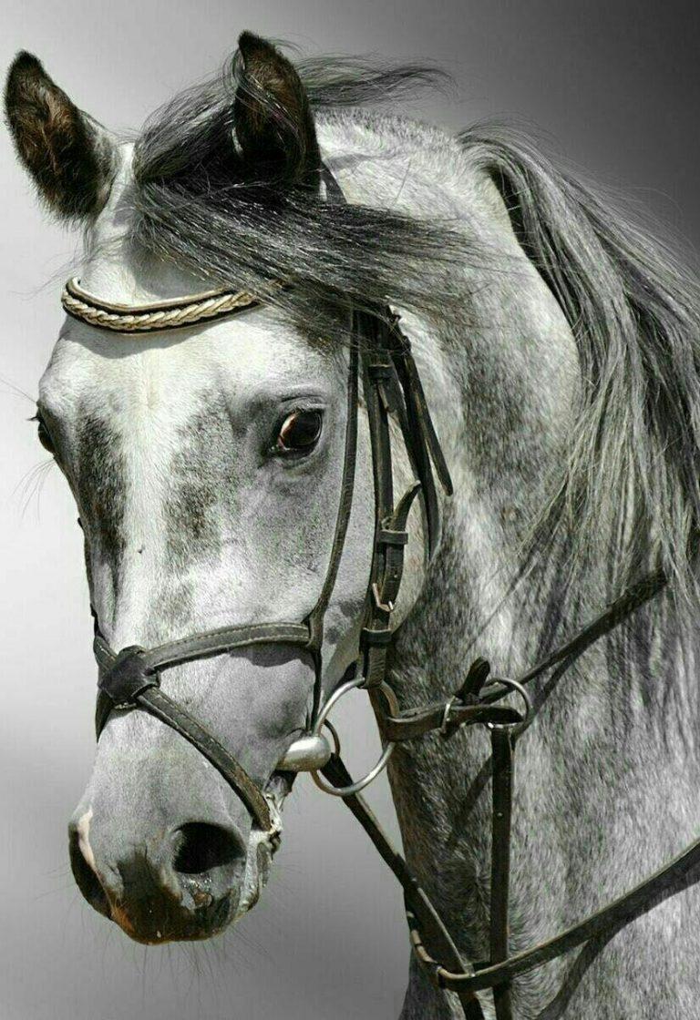 مدل نقاشی اسب سری 2 مدل نقاشی اسب سری 2 photo 2018 06 27 11 37 24 2 768x1120