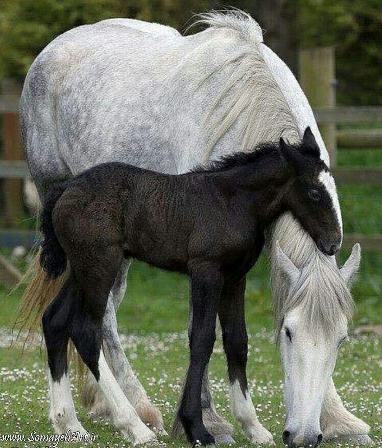 مدل نقاشی اسب سری 2 مدل نقاشی اسب سری 2 photo 2018 06 27 11 37 25