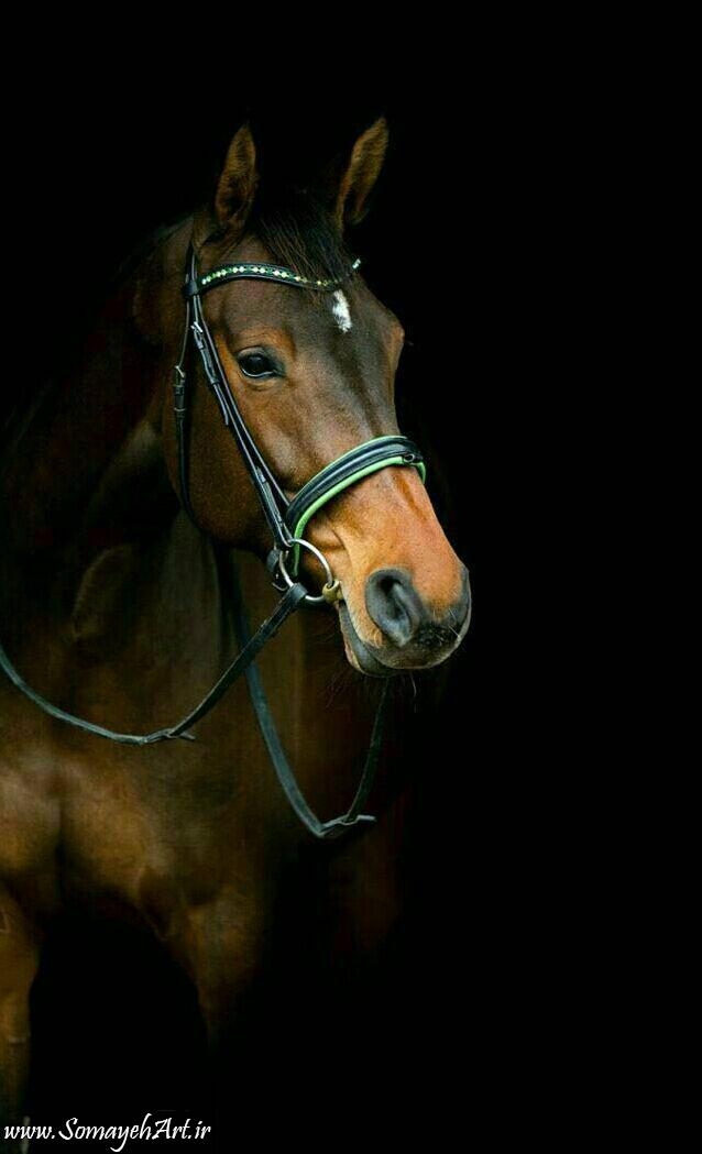 مدل نقاشی اسب سری 2 مدل نقاشی اسب سری 2 photo 2018 06 27 11 37 26 2