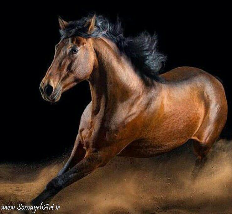 مدل نقاشی اسب سری 2 مدل نقاشی اسب سری 2 photo 2018 06 27 11 37 27 2
