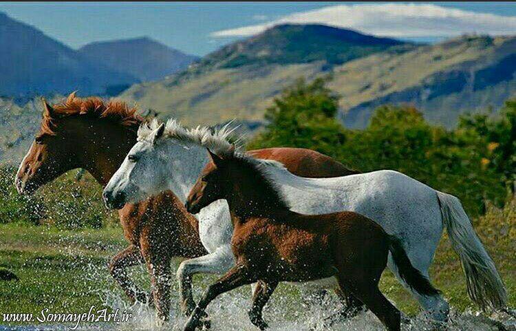 مدل نقاشی اسب سری 2 مدل نقاشی اسب سری 2 photo 2018 06 27 11 37 27