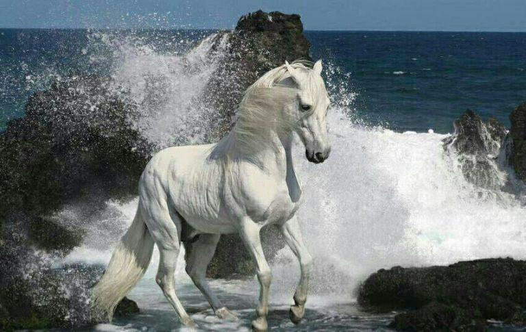 مدل نقاشی اسب سری 2 مدل نقاشی اسب سری 2 photo 2018 06 27 11 37 28 768x485