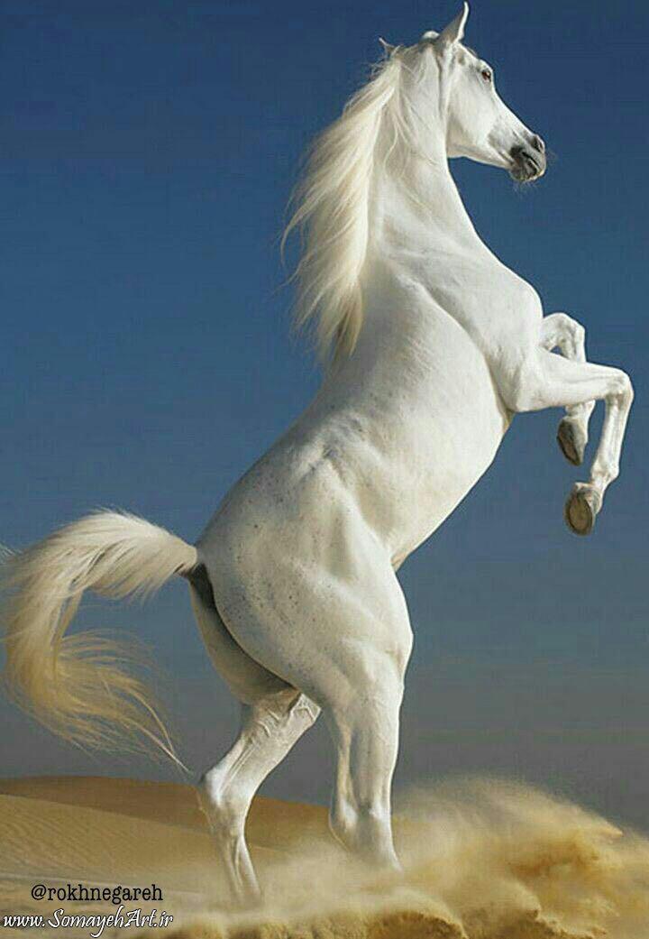 مدل نقاشی اسب سری 2 مدل نقاشی اسب سری 2 photo 2018 06 27 11 37 29