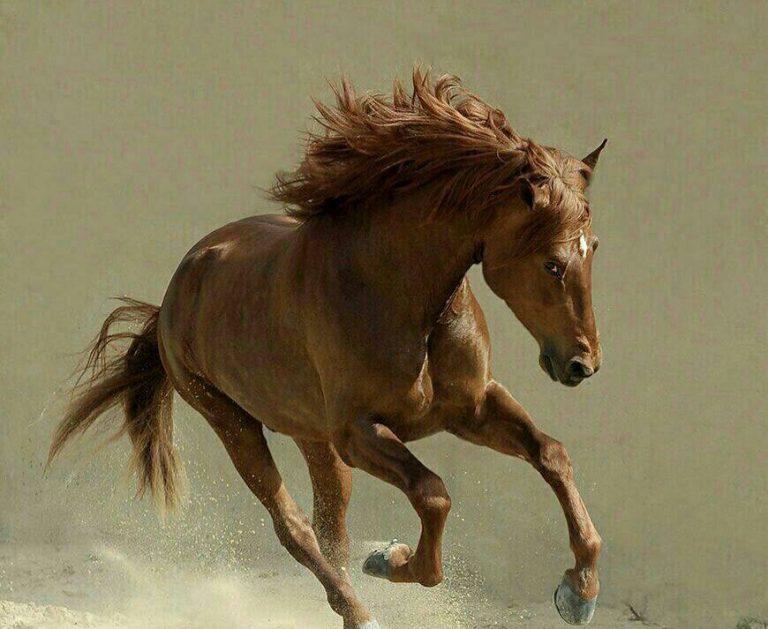 مدل نقاشی اسب سری 2 مدل نقاشی اسب سری 2 photo 2018 06 27 11 37 30 2 768x629