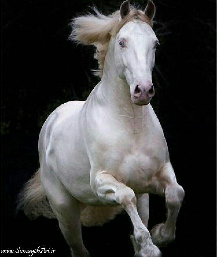 مدل نقاشی اسب سری 2 مدل نقاشی اسب سری 2 photo 2018 06 27 11 37 30