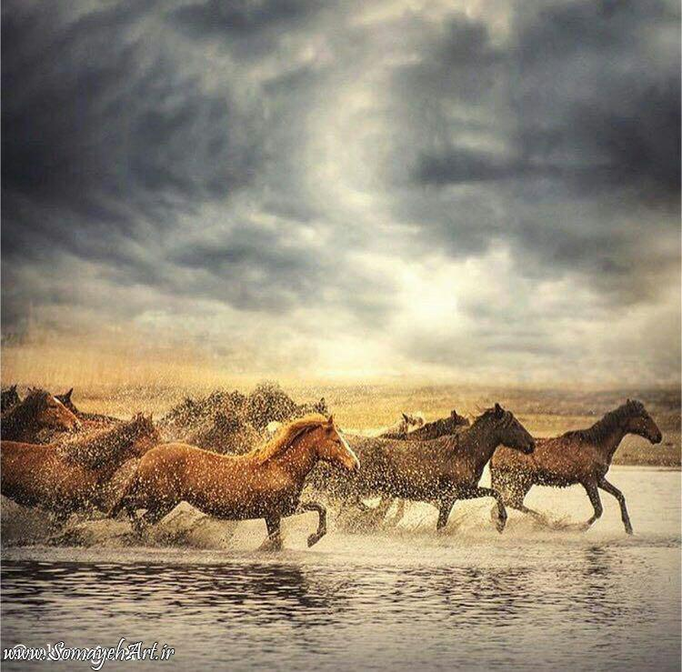 مدل نقاشی اسب سری 2 مدل نقاشی اسب سری 2 photo 2018 06 27 11 37 31