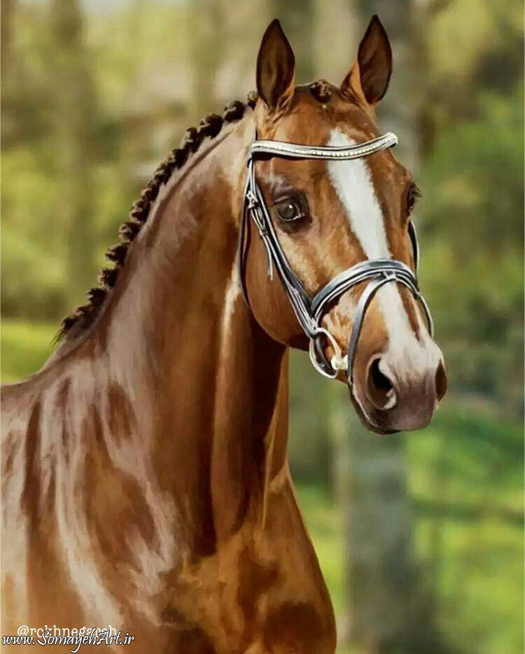 مدل نقاشی اسب سری 2 مدل نقاشی اسب سری 2 photo 2018 06 27 11 37 32