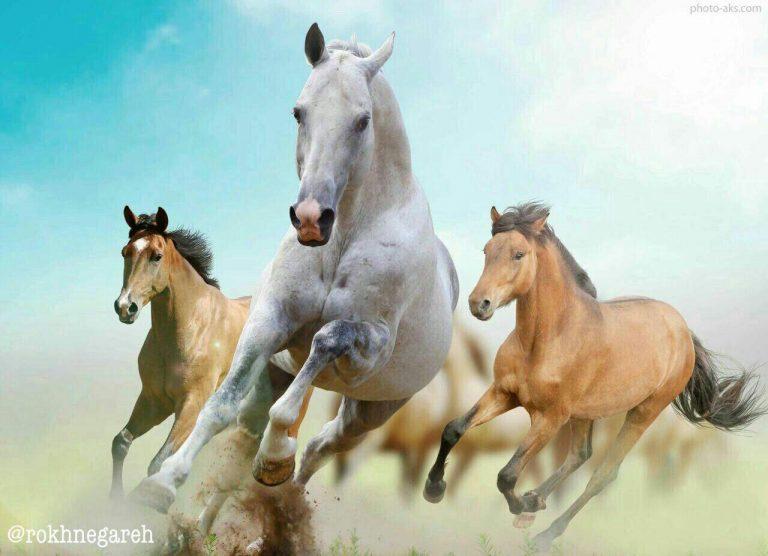 مدل نقاشی اسب سری 2 مدل نقاشی اسب سری 2 photo 2018 06 27 11 37 33 768x556